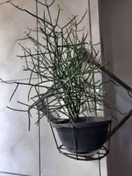 Planta com suporte de ferro