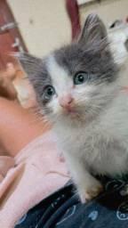 Doa se filhote de gato macho