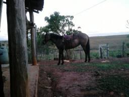 Vendo egua