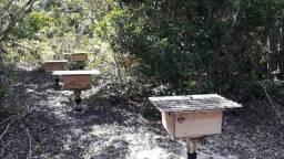 Vende-se caixas de abelha