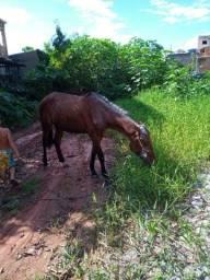 Cavalo (potro)