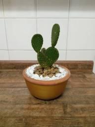 Cactus com vasinho decorado! Lindo!