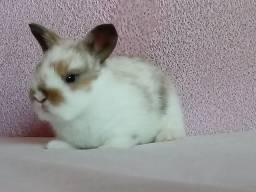 Mini coelho!