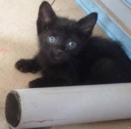 Gatos para Doação