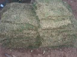 Vendo grama com otimo preço