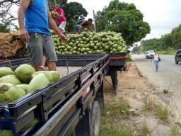 Atacadão coco verde em bacaxa