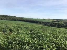 Fazenda 33 alqueires lavoura em Ipameri Goiás