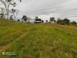 Fazenda de 50 alqueires na Beira do Rio Corumbá em Ipameri