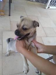Esse cachorro foi encontrado aq no bairro São Geraldo