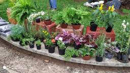 Flores ,ervas ,arvores frutiferas
