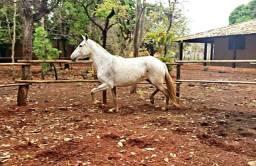 Égua registrada a venda