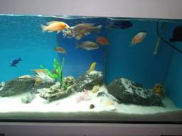 Aquario com preto