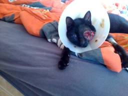 O gatinho cegueta precisa de ajuda!!