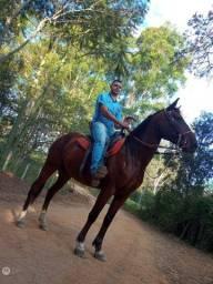 Cavalo porte grande