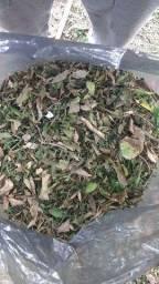 Material orgânico para compostagem