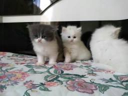 Vende se lindos gatinhos