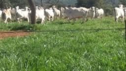 379 hectares em Cassilandia-ms - permuta por SP
