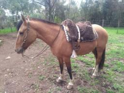 Égua gatiada