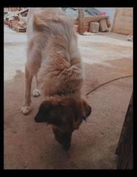 Adoção de linda cadela