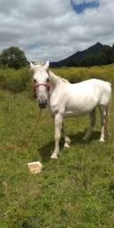 Lindo cavalo, Especial