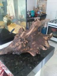 Tronco madeirapura
