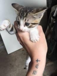 Doação de 4 filhotes de gato