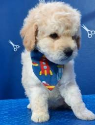 Lindo Poodle Toy