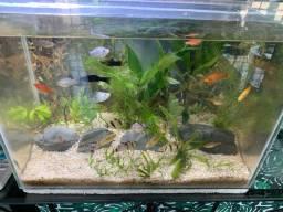 Aquário bem conservado somente o aquário
