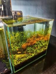 Aquario de neocaridina