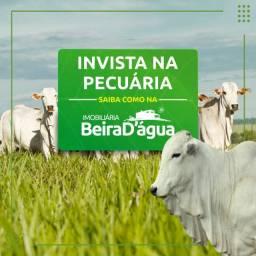 Fazendas Pecuaria a Venda em Minas Gerais