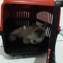 Caixinha De Transporte Gatos