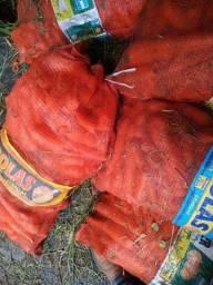 Vendo cenouras boa pro consumo