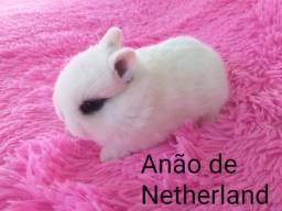 Anão de netherland
