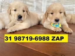 Canil Premium Filhotes Cães BH Golden Rottweiler Akita Pastor Labrador Chow Chow
