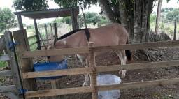Vendo mula