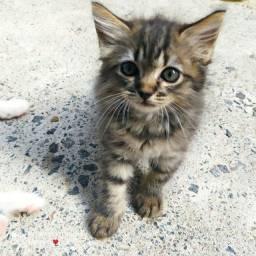 Casal de gato para doação ?