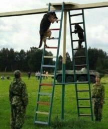 Adestramento k9 e reabilitação