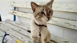 Gato macho para doação