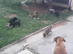 Cachorrinhos mestiços