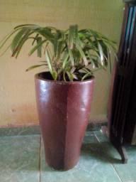 Estante e planta (vendo)