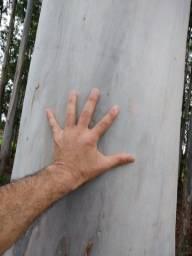Eucaliptos Gramphis | 250 Árvores