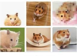 Hamster adultos 20,00