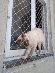 Telas de proteção para gatos...