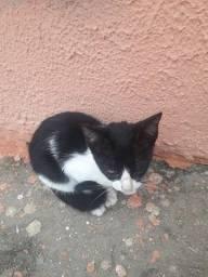 Doação de gatinha responsável urgente