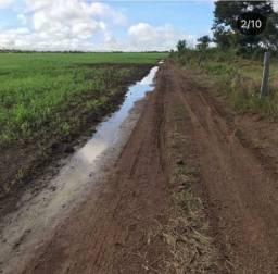 Fazenda para arrendamento com 300 alqueires no sul do Pará- Santa Maria das Barreiras- PA
