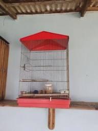 Gaiola grande de papagaio e periquitos