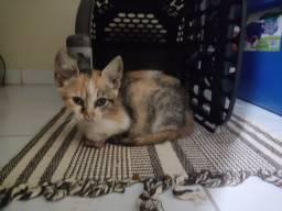 Gatinha filhote para adoção