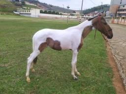 Venda de cavalo