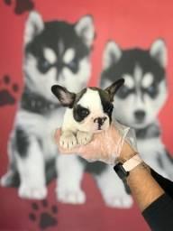 Título do anúncio: Bulldog Francês com pedigree e condições especiais. Ligue *.