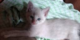 Gatinhos fofos disponível para adoção